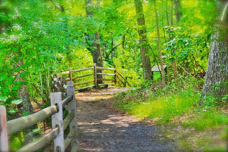 In the woods NJ