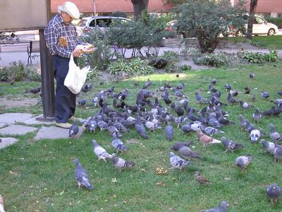 Old Asian Man, Feeding the doves