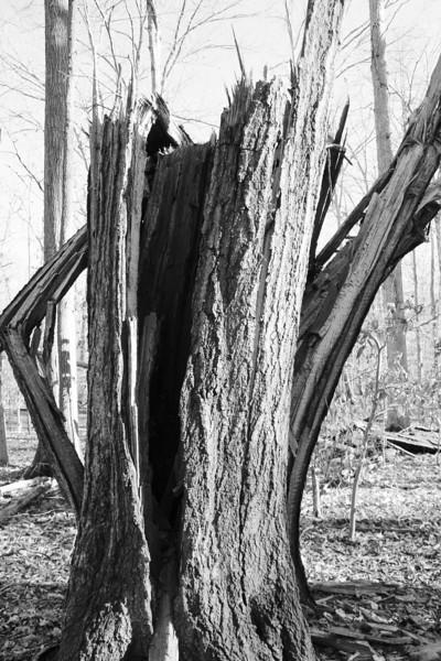 Tree Study 02