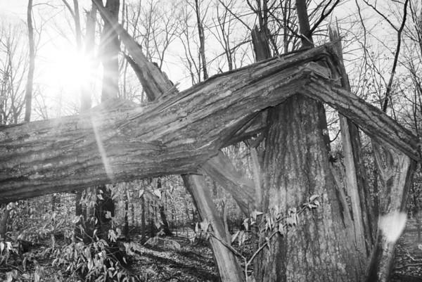 Tree Study 01