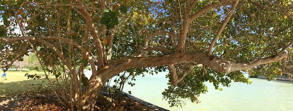 Tree at the Flamingo Visitor Center - Everglades National Park.