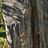 Hacked out  limbs (Vicolo San Martino near Pitigliano, Italy 2011)