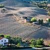 New olive grove (SC della Sforzesca E of Castell'Azzara, Italy 2011)