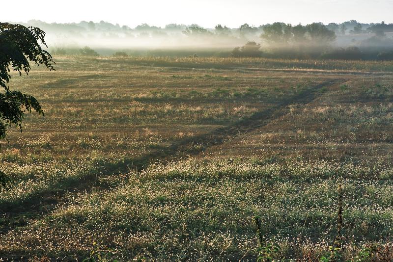 Morning mist (near Pratolungo, Italy 2011)
