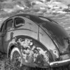 American beetle (Aldon Auto Salvage, Lamont, Alberta, Canada 2012)