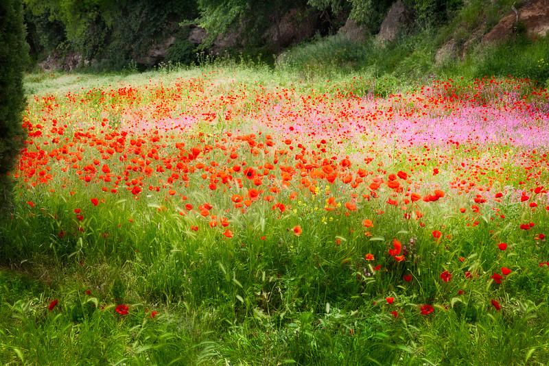 Spring meadows (Tivoli, Italy 2012)
