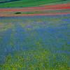 Blue field (Piano Grande di Castelluccio, Italy 2012)