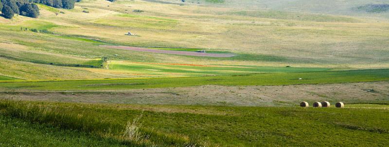 Summer fields (Piano Grande di Castelluccio, Italy 2012)