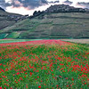 Red highway to Castelluccio (Piano Grande di Castelluccio, Italy 2012)