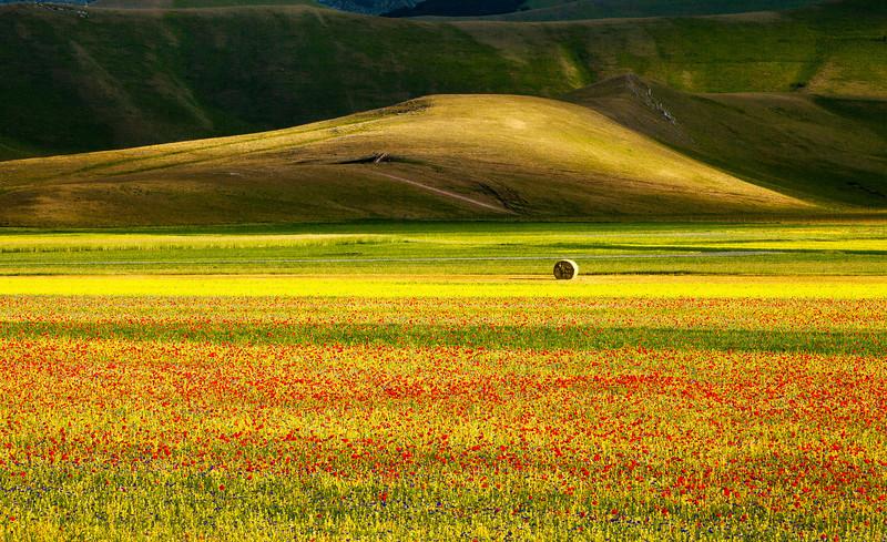 Left alone (Piano Grande di Castelluccio, Italy 2012)