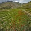 Poppie trail (Piano Grande di Castelluccio, Italy 2012)