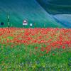 Autostrada dei fiori (Piano Grande di Castelluccio, Umbria, Italy 2012)
