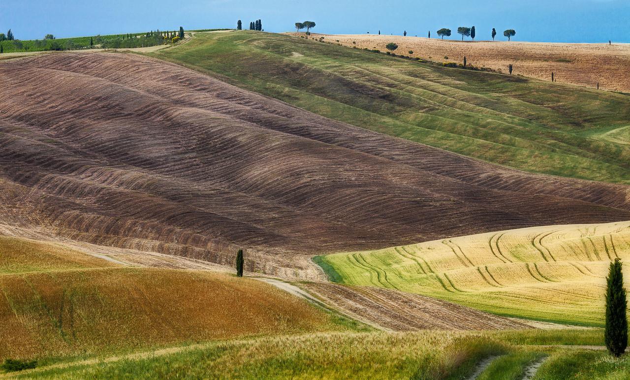 Ridge (Fosso Triboli, San Quirico D'Orcia, Italy 2012)