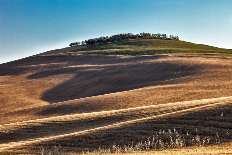 Olive grove top (near Pienza, Italy 2012)