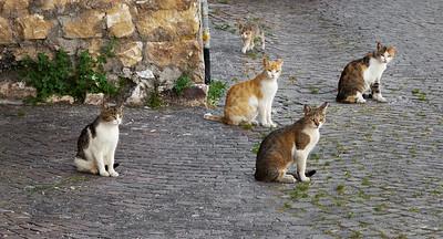 Bandits of Campo di Giove