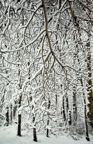 Under snow branches