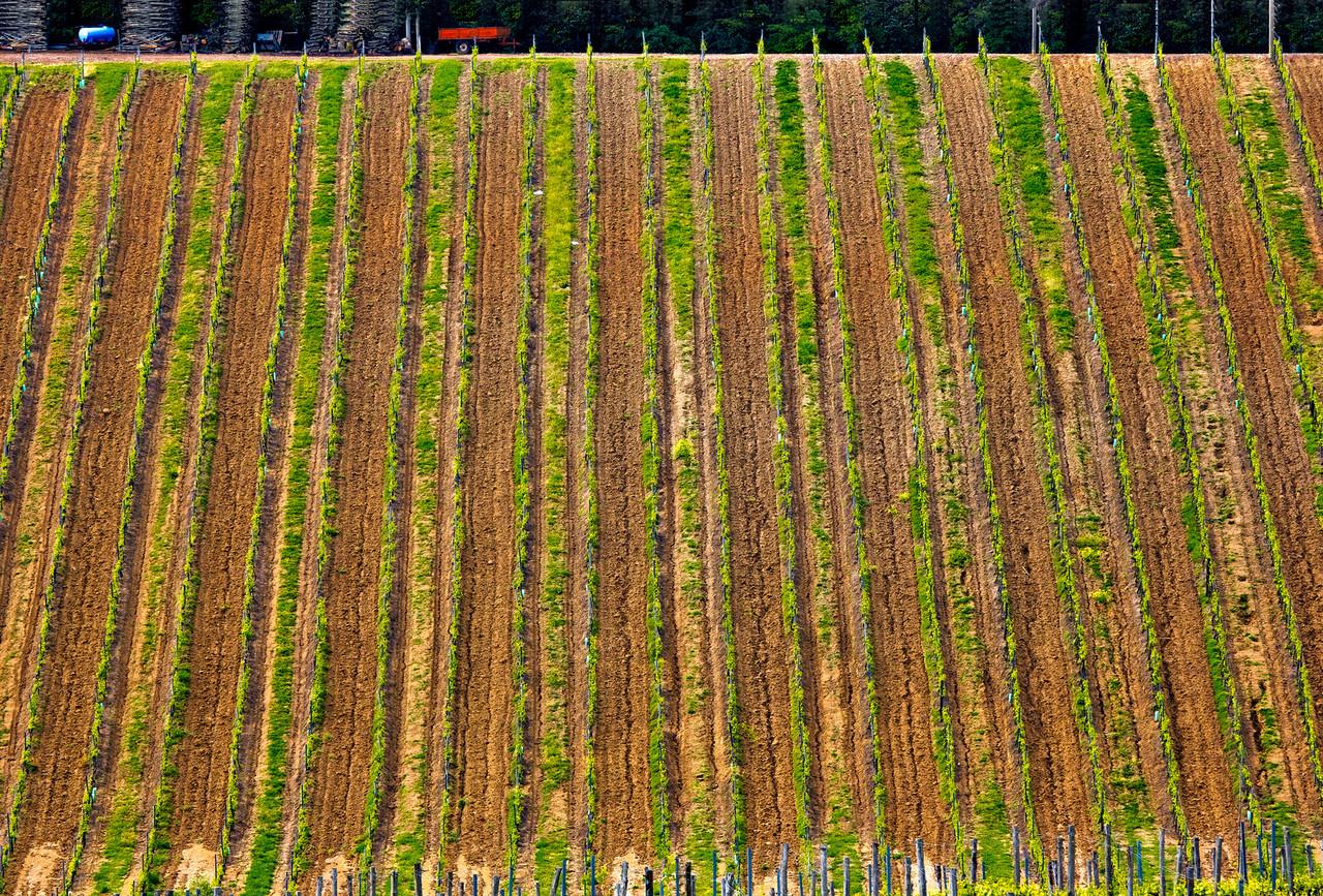 Growing wine vertically