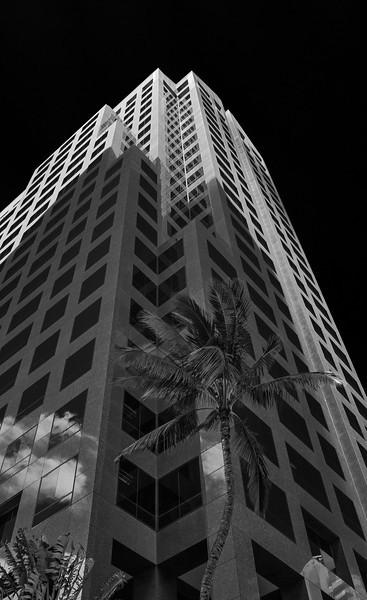 A tall palm tree