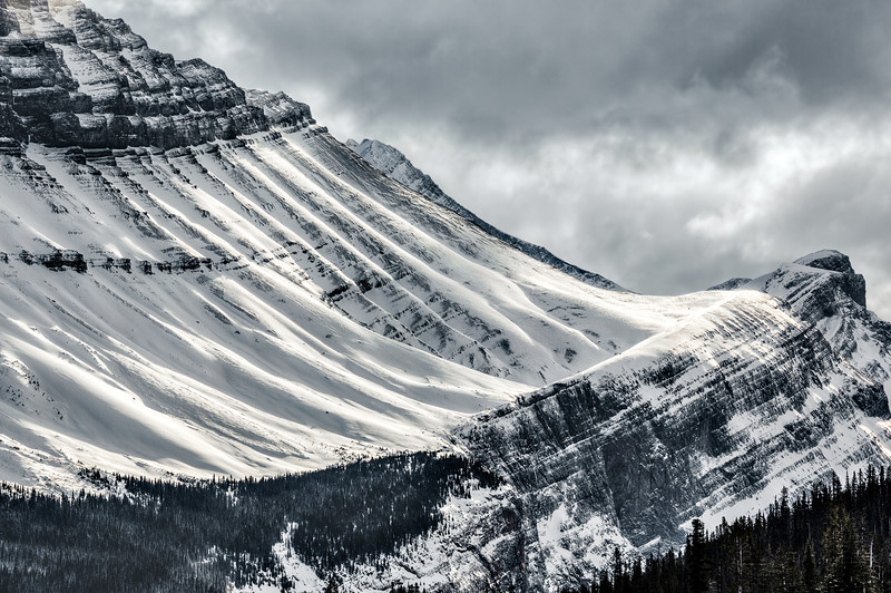 Snowy harp (Jasper National Park, Alberta, Canada 2013)