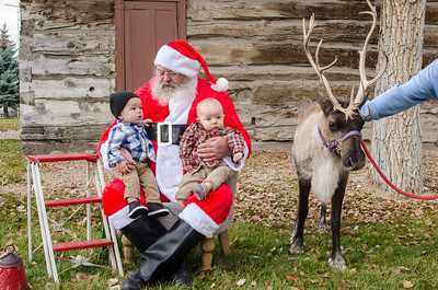 Reindeer2016-8
