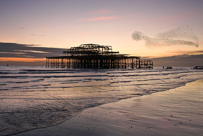 Murmuration. West Pier, Brighton