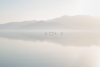 Pelicans over the Salton Sea