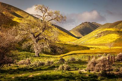 Superbloom, Carrizo Plain National Monument