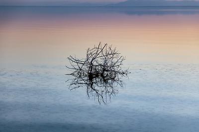 Tumbleweed, Salton Sea, California