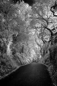 Canopied Lane, Godshill, Isle of Wight