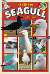 Kevin The Seagull