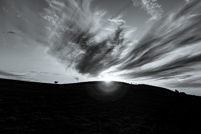 Silhouetted Sheep, Mount Caburn