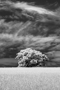 Tree and Cloud, Barcombe