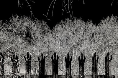 Fence and Branch