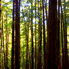 Muir Woods 1 of 4