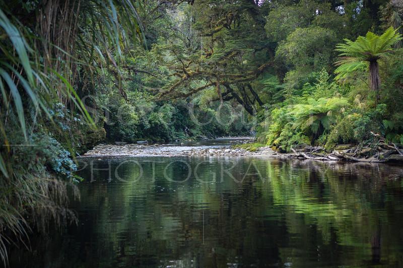 West Coast Rainforest