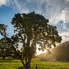 Sun lit Tree