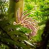 Karamea Nikau Palm