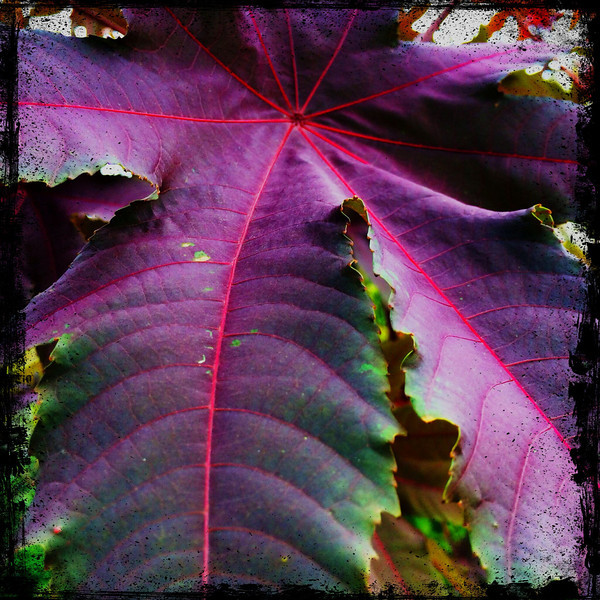 A pretty leaf at one of the smithsonian parks in DC