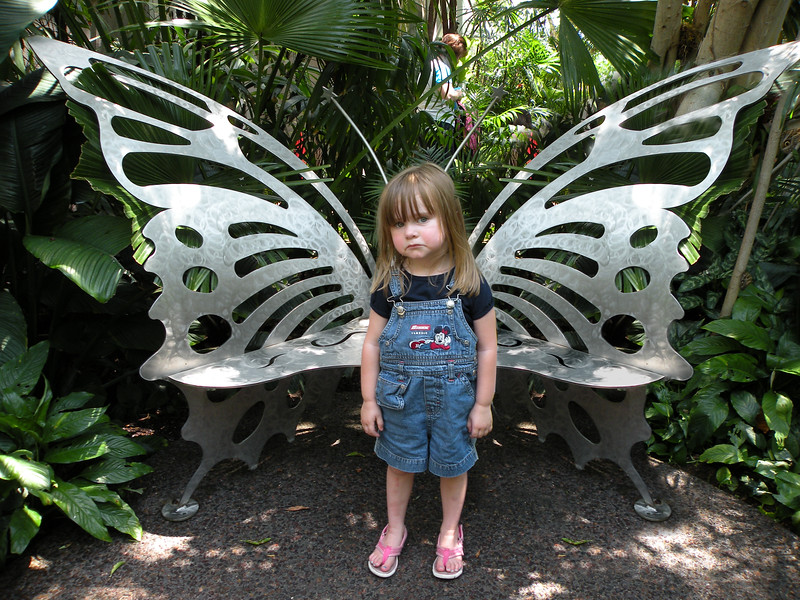 sad butterfly