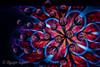 Red Petals 2 (water drops)
