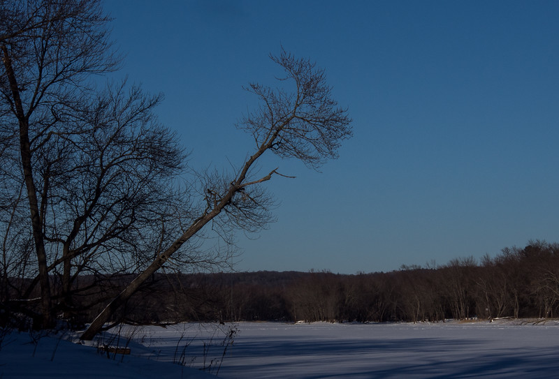 Leaning Tree On the Winter St. Croix