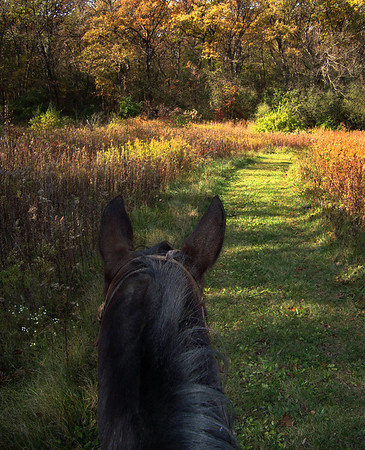 Autumn Trail Ride   Rush Creek -McHenry County Conservation District - Harvard, IL  Suzanne Ridenour - Crystal Lake, IL