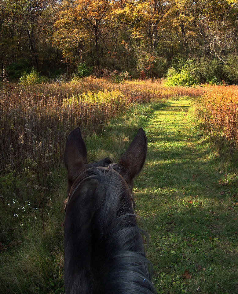 Autumn Trail Ride<br />   Rush Creek -McHenry County Conservation District - Harvard, IL<br /> <br /> Suzanne Ridenour - Crystal Lake, IL