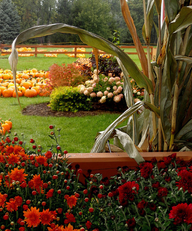 Elements of Autumn <br />     Royal Oaks Farm - Harvard, IL<br /> <br /> Joyce Mate - San Diego, CA