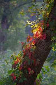 Autumn Begins   Taken on Cherry Valley Road  3rd Place Winner - Margie Bjorkman, McHenry,IL