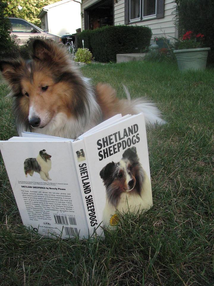 I photographed my dog, Teddie, who is relaxing outside with a book All About Shetland Sheepdogs on a recent warm September afternoon. He is happiest when he's outside and he's waiting for someone to read to him.<br /> <br />  <br /> <br /> Photo was taken with a Canon PowerShot S3 on Auto<br /> <br />  Donna Bieschke<br />    Crystal Lake, IL