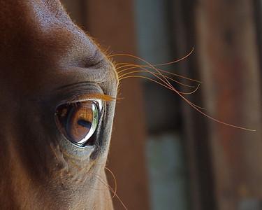 1st Place -  Amateur Division  Winnie's Eye       My Horse Winnie  Margie Bjorkman - McHenry,IL