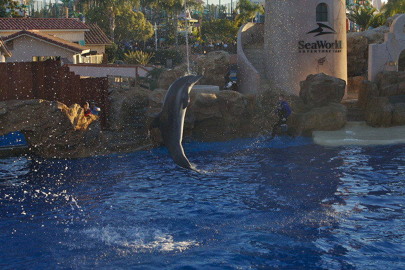 A dolphin jumps on command at Sea World.