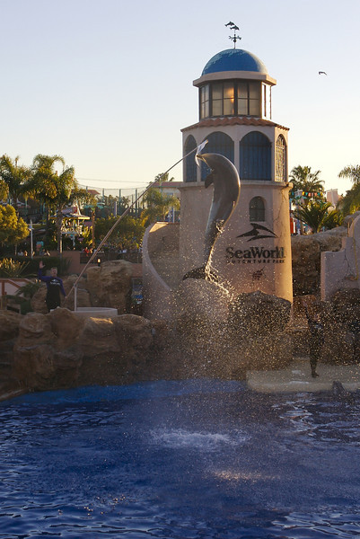 A dolphin jumps high during the finale of the Dolphin Show at Sea World.