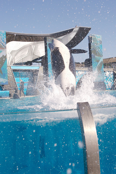 Shamu introduces us to cold, 55 degree water.